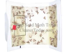 Pantry Moth Traps that Work Control Indian Meal Moth problems today