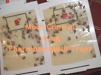 Brown Moth Pheromone Trap Picture