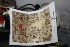 Bird Seed Moth Trap Picture Monroe Michigan