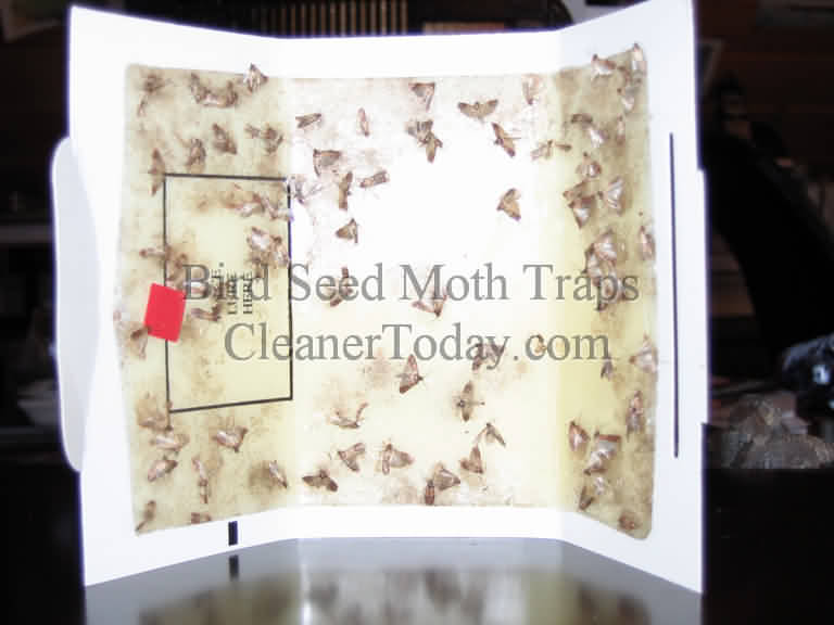 Moth Trap Photo