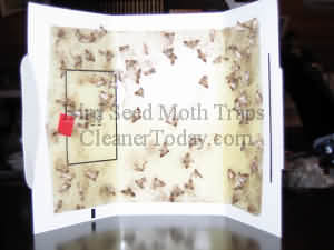 Bird Seed Moth Trap Picture Oregon