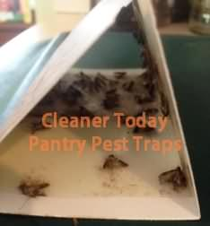 Pantry Pests in Florida Pantry