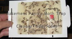 Basement Pantry Moth Trap