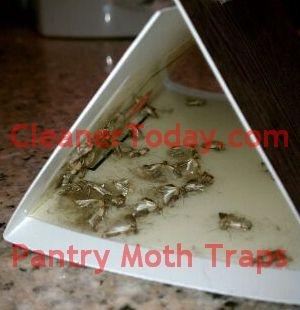 BirdSeed Moth Traps Control Bird Seed Problems