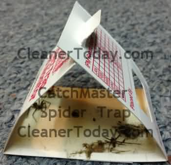 House Spider Trap