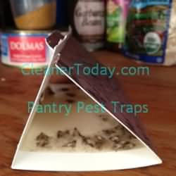 Pantry Pest Traps in action