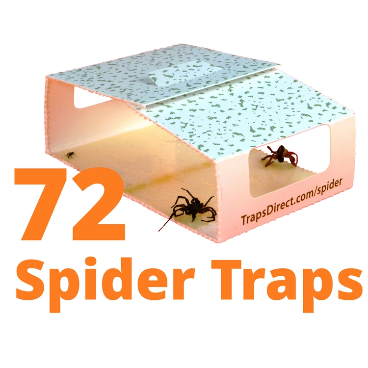 Simple Green Spider Trap Revised Design Still Safe For
