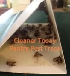 Birdseed Moth Traps Control Bird Seed Moth Problems